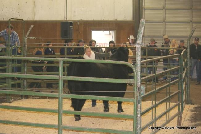 klamath bull sale 2014-Marky Mark